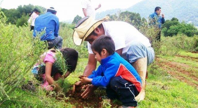 Este-año-se-reforestarán-100-mil-800x350